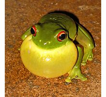 Who says I've got a double chin?... (Litoria Chloris) Photographic Print