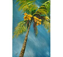 Coconut reaching for the sky Photographic Print