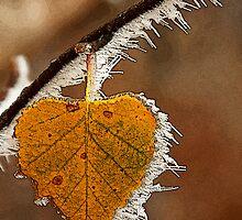 Winter postcard by julien  oncete