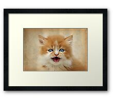 Where's my DINNER?!! Framed Print