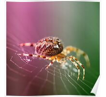 Spidery  Poster