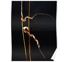 Forest Find #3 -  Rhythmic Gymnastics  (The Ribbon) Poster