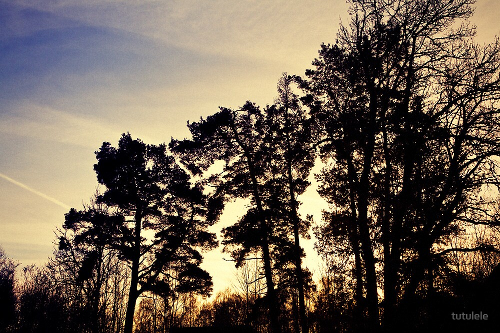 The Trees Are Tall by tutulele