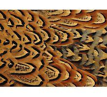 Pheasant Photographic Print