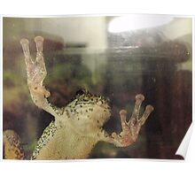 Frog On Glass Poster