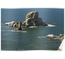 Sea Lion Rock, Oregon Poster