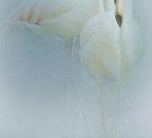 Flamingo Fandango by Catherine Hamilton-Veal  ©
