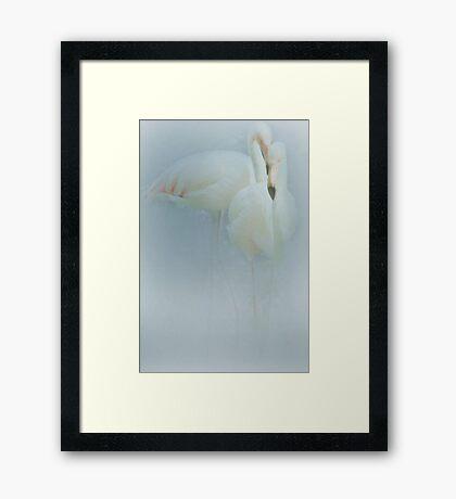 Flamingo Fandango Framed Print