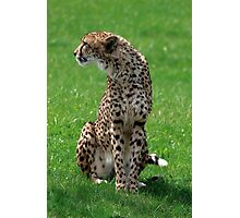 Sitting Pretty Cheetah Photographic Print