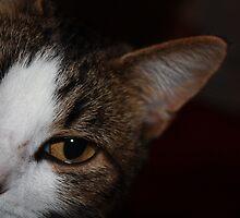Here kitty, kitty... by Linda Costello Hinchey
