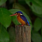 King Fisher by emmelined