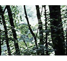 Trail Side IOWA Photographic Print