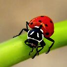 LadyBug ~ Whew That was A Close One by Carla Jensen