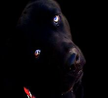 Black Lab  by Carla Jensen