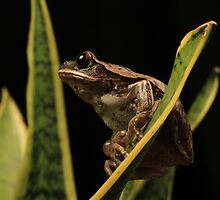 Frog perching on Plant by nikkihinton