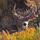 Horns & Bugles (Deer, Antelope & Elk) by Arla M. Ruggles