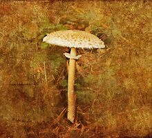 Wild mushroom with textures by LisaRoberts