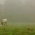 Fog Grazer by Stephen J  Dowdell