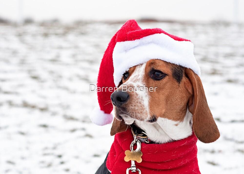 Holiday Hound by Darren Boucher