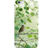 Carcasa iPhone Pinzón / iPhone case Chaffinch iPhone Case/Skin