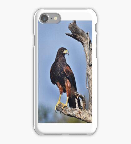 Harris Hawk iPhone Case iPhone Case/Skin