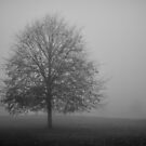 Hampton Common in Fog by Kasia Nowak