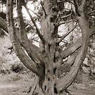 Tree Of Wisdom by joerelic37