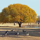 Golden Autumn view of Texas by Zi-O