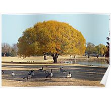 Golden Autumn view of Texas Poster