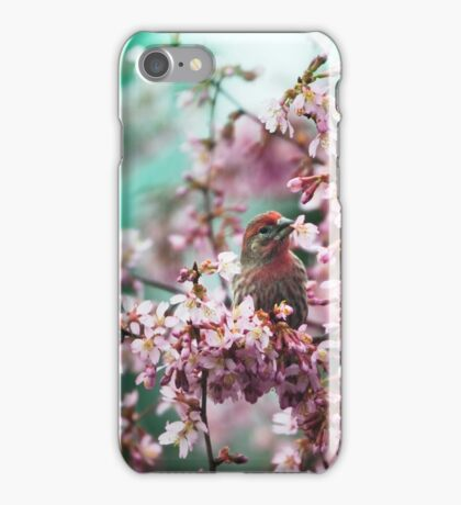 Stop Eating My Cherry Blossoms iPhone Case/Skin