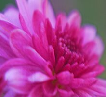 carnation case by andytechie