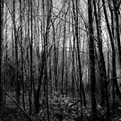 The Dark, Dark Woods by joerelic37