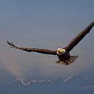 Strength Of An Eagle by Deborah  Benoit