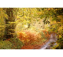 Autumn Lane .. Photographic Print
