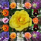 Vibrant Summer Flowers Collage featuring Roses by BlueMoonRose