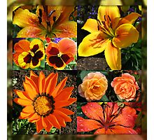 Blossoms of Fire Collage Photographic Print