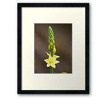 First to open Framed Print