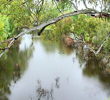 RAIN FALLING ON THE MURRUMBIDGEE RIVER  by Ronald Rockman