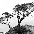 Trees in Black and White by yurix