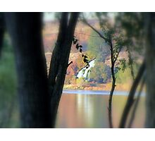 Through the Trees...Along The Salmon River Photographic Print