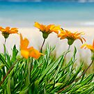 Orange flowers on the Sunny Ocean Beach by yurix
