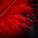 Red Feather Macro by Mattie Bryant