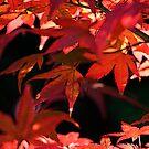 Fire Leaves by Greg German