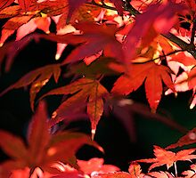 Fire Leaves by Greg German