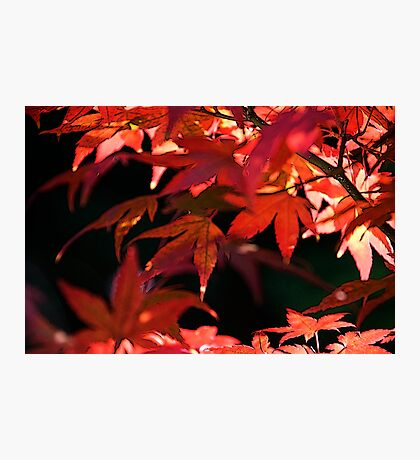 Fire Leaves Photographic Print