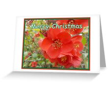 Christmas Blossom Greeting Card