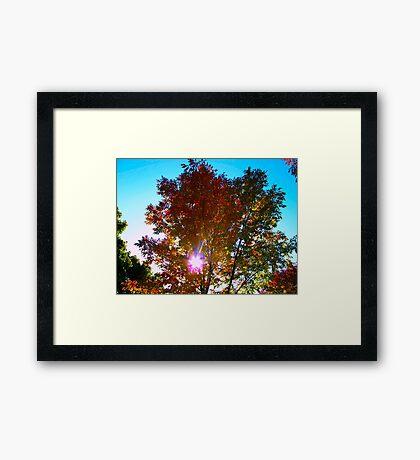 Autumn levity Framed Print