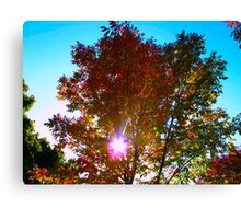 Autumn levity Canvas Print