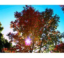 Autumn levity Photographic Print