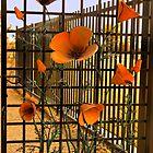 Garden gate -Clovis Botanical Gardens by MarthaBurns